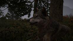 Far Cry® 4 20141210193641