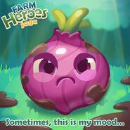 Onion grumpy introduction