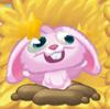Rob the Rabbit on hay Dazed 3