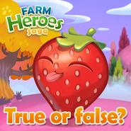 Strawberry True or false