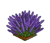 Perfect Lavender-icon