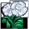 White Carnation-icon