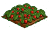 Strawberry 100.png