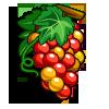 Late Harvest Semillon Grape-icon
