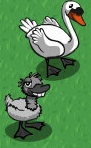 Ugly Duckling old-icon