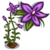 Royal Bluebell-icon