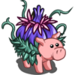 Flowering Pig-icon