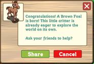 Brown foal help