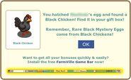 Hatch Black Chicken