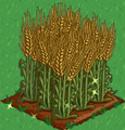 Wheat extra100.png