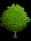 Asian Pear Tree1-icon