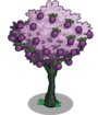 Plum2-icon.png