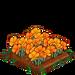Golden Poppy extra100