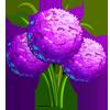 Allium Bulbs-icon