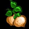 Jicama-icon