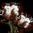 Cotton-icon