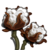 Cotton-icon.png