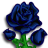 Black Rose-icon