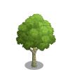 American Sycamore Tree-icon