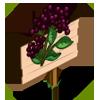 Elderberry Mastery Sign-icon