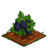 Super Black Berries 100-icon.png