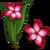 Impala Lily-icon
