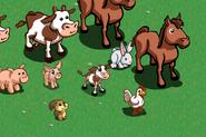 Squirrel.farm