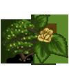 Wych Elm-icon