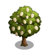 Eastern Cottonwood Tree-icon