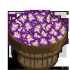 Gladiolus Bushel-icon