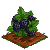 Super Black Berries extra100-icon.png