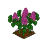 Perfect Lilac-icon.png