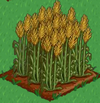 Wheat 100.png