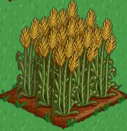 Plik:Wheat 100.png