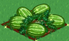 Watermelon extra100.png