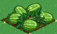 Plik:Watermelon extra100.png