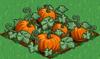 Pumpkin 100.png