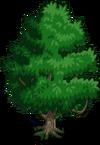 Jackfruit Tree1-icon