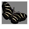 Zebra Butterfly-icon