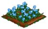 Forget-Me-Not 100.png