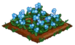 Forget-Me-Not 100