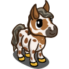 Mini Appaloosa Foal-icon
