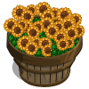 Sunflowers Bushel-icon