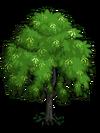 Indian Laurel Tree1-icon