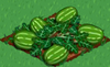 Watermelon 100.png