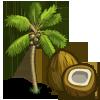 Coconut Tree-icon