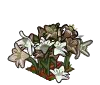 Wither Bunch Lily-icon