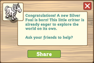 Silver pony foal message