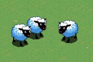 Fan Sheep 2