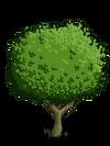 Granny Smith Apple Tree1-icon